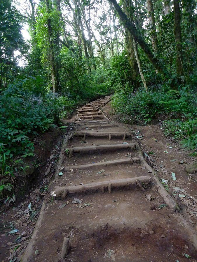 ascension kilimandjaro voie marangu