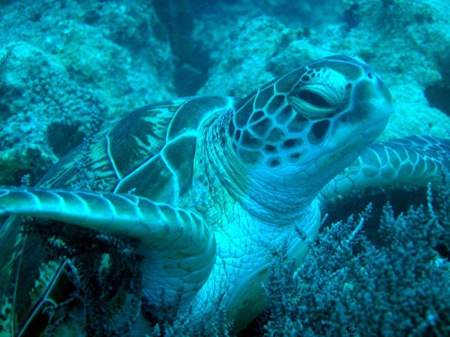 plongée sous-marine Zanzibar