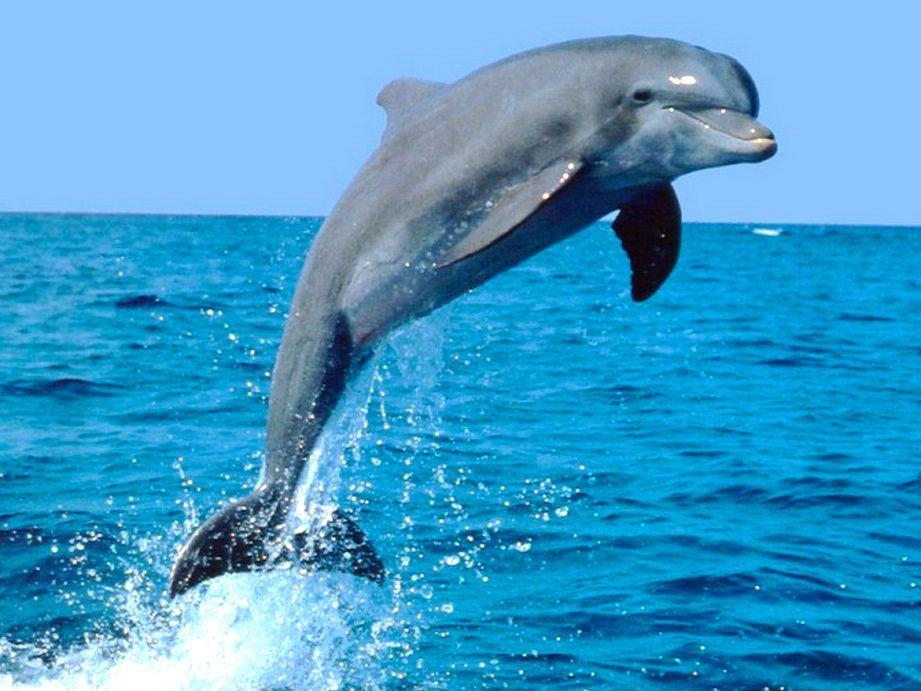 nager avec les dauphins Zanzibar