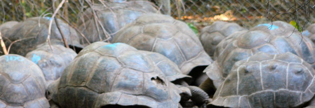 tortues géantes Zanzibar