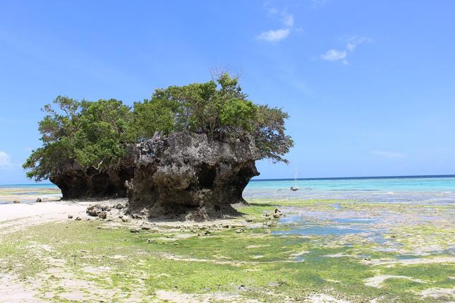 Pemba Zanzibar