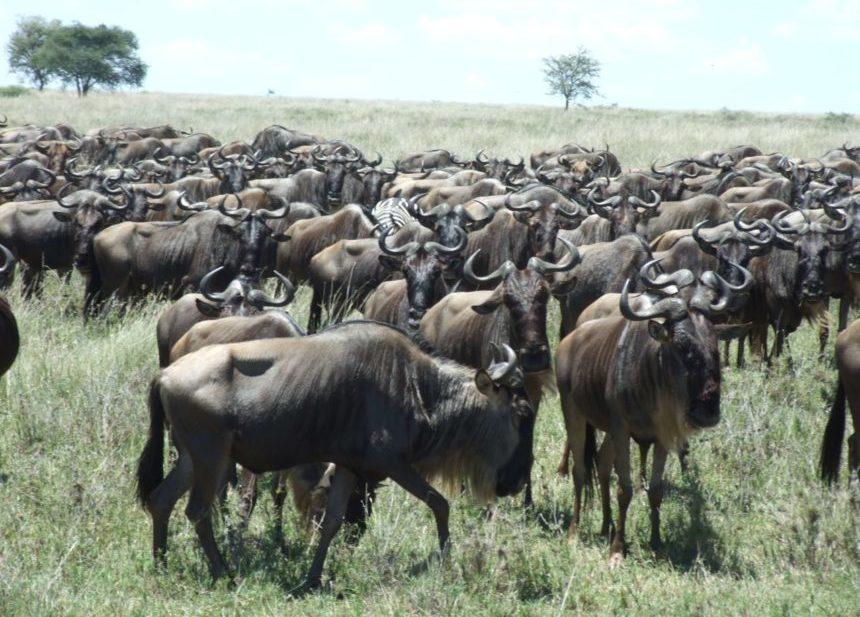 Migración Tanzania