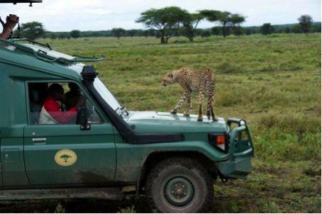 Safari Guidé En Tanzanie