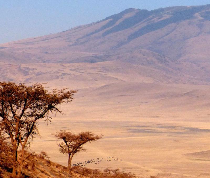 Tanzania Ngorongoro Safari